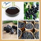Natural Organic Blackcurrant P. E. in Bulk Stock