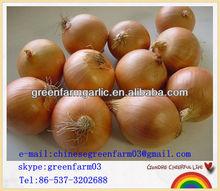 good quality fresh clean yellow onion