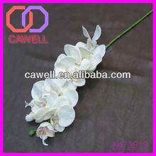wedding Orchid flower