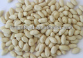 blanched kernel amendoim em forma longa