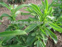Plant Extract Stevioside powder/Stevia sugar