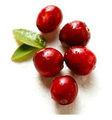 melhor puro suco de cranberry concentrado em pó de frutas