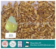 GMP 100% Natural Radix Scutellariae Extract
