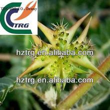 tribulus terrestris extract(total saponins 80%)
