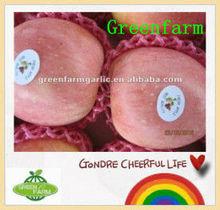 2013 new crop and fresh fuji apple in china