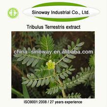 tribulus terrestris extract powder 60 saponins