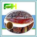 100% naturel Reishi ( champignon ) poudre
