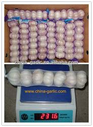 Garlic/Garlic Price/Garlic Price In China 2013