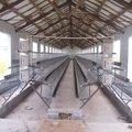 suministro de aves trampa jaulas de aves de corral con granja para el diseño de capas