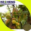 Gallnut extract food tannic acid/ tannic acid