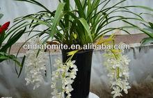 orchid growing medium