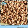 buckwheat honey buckwheat husk china new crop