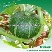 2013 Fresh Pumpkin seeds for growing