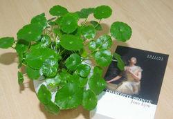 Gotu Kola Herb Extract 10%-80% Triterpenes,10%-40%Asiaticoside