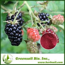 Blackberry Extract Powder,Active Ingredients:Anthocyanidins