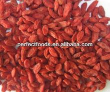 dried goji berries/goji/wolfberry/import goji berry/organic goji berries