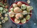 2013 chinois. meilleur prix des tomates fraîches pour la vente