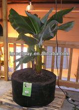 tree nursery plant and tree nursery polypropylene non woven fabric bag