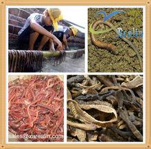 Lumbrokinase earthworm extract
