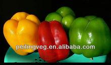 Shouguang Color Pepper Exporter