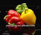 10/15kg carton bags 2013 new crop Chinese Red Sweet Pepper