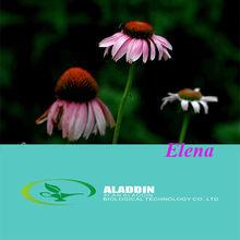 Brauneria Angustifolia / Brauneria Pallida / Comb Flower P.E.
