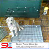 metal anticollision modula dog breeding cage, economical small steel bar collapsible pet cage ,expanded double cheap cage .
