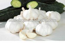 Pure White Big Size Fresh Chinese Garlic 2013