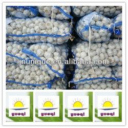 fresh garlic price from china factory