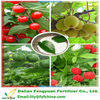 plant organic fertilizer natural borax fertilizer for soil conditioner