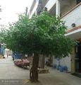 artificial de plástico grande ficus árvore