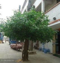 Artificial de plástico grandes ficus árbol