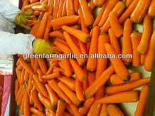 hot selling green vegetable- fresh Carrot