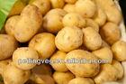 CHINESE NEW FRESH POTATO (2013 new crop 50-100g)
