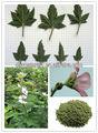 a base de hierbas de hoja de tabaco