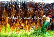 Bladderwrack Seaweed Kelp Extract 10% Iodine CAS No.: 92128-82-0