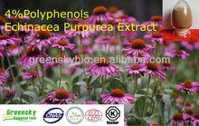 4%Polyphenols Echinacea Purpurea Extract