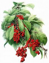 Herb Extract Fructus Schisandrae 2% schisandrins Powder
