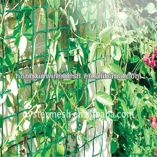 lattice for climbing plants