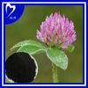 red clover isoflavones