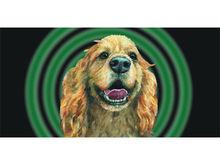 Bn233 Pets Grooming Cocker Spaniel Easy Safe Furry Salon Scissor Banner Sign