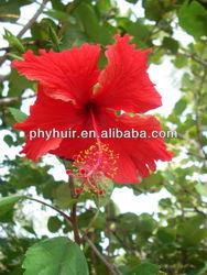 Hibiscus Esculentus Fruit (Okra) Extract Phyto Hyaluron B Natural Cosmetic Ingredient