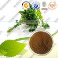 Natural semente salsa extrato Petroselinum sativum