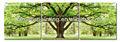 pinturas modernas de los árboles