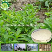 Organic Stevia P.E.