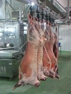 HALAL LAMB MEAT FROM Australia