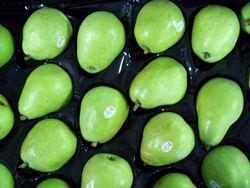 USA Fresh D'Anjou Pears