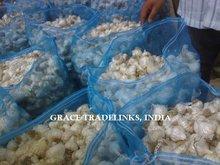 Fresh Normal White Garlic / Fresh Indian Garlic / Big Size Garlic
