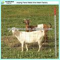 ovejas galvanizado alambre de púas de la cerca