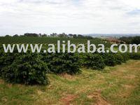 farm, rural property,